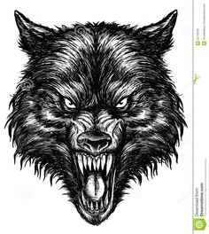 angry wolf drawing - Google zoeken                                                                                                                                                     More