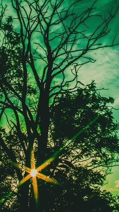 Nightfall Sunlight Through Forest #iPhone #5s #wallpaper