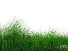 Grass  – The Next Big Thing In The Office Interior Design