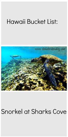 Tips, tricks and a guide to snorkeling at Sharks Cove, North Shore Oahu. One to add to the Hawaiian Bucket List!