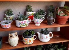 Best indoor succulent planting ideas that can beautify your home garden tea cup planter diy wall . Tea Cup Planter, Indoor Succulent Planter, Hanging Succulents, Growing Succulents, Diy Planters, Cacti And Succulents, Succulent Ideas, Propagating Succulents, Pentagon Design