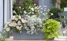 Balkonkasten Balcony box with white flowering plants The Vital Role of Acoustical Door Seals The imp Garden Sink, Balcony Garden, Indoor Garden, Indoor Plants, Outdoor Gardens, White Flowering Plants, Decoration Plante, Garden Boxes, Plantation