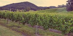 Home Hill Winery - Huon Valley, lovely day , lovely wine.
