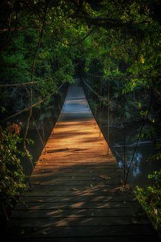 Suspension bridge, Khao Yai National Park, Thailand
