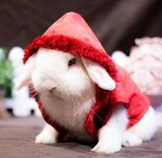 bunny red