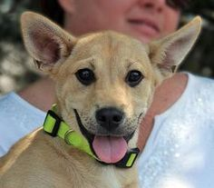 Meet Nash, he is your typical happy-go-lucky puppy, and those ears make him one of the cutest little guys around! He is a Shephard mix and is expected to be about 60 lbs full grown. Nash enjoys snuggling, sleeping and playing with his family. He is well socialized with people and dogs. He is working hard on his potty training and with that smart shephard brain he will have it down in no time. He would make a nice dog for anyone looking for a new addition.