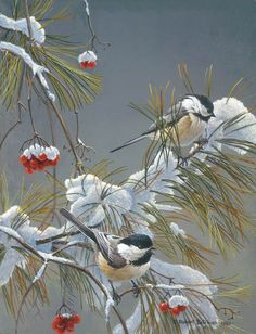 Chickadees in winter, image detail for -Robert Bateman Prints and Paintings submited images Wildlife Paintings, Wildlife Art, Art And Illustration, Watercolor Bird, Watercolor Paintings, Canadian Artists, Cool Landscapes, Bird Art, Beautiful Birds