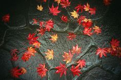 Lomography - Tips for a Fall Themed Photo Walk! Fallen Leaves, Autumn Leaves, Photo Walk, Shoot Film, Lomography, Autumn Theme, Photography Tips, Walking, Photoshoot
