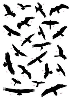 raptor silhouettes - all visible in the skies above northern spain. no answer key, though. :(