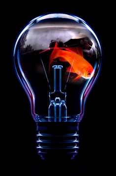 goldfish in a lightbulb