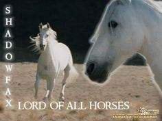 Shadowfax - one of Middle Earth's most famous horses - companion of Gandalf
