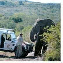31 elephants journey to pay their respects to dead author and friend.
