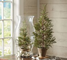 Faux Potted Mini Pine Tree | Pottery Barn