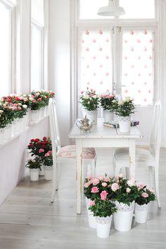 El rosal, la planta de mayo