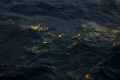 sea, water, and waves image Gold Aesthetic, Aesthetic Images, Hogwarts, Black Sails, Pirate Life, Lord, Pirates Of The Caribbean, Dragon Age, We Heart It