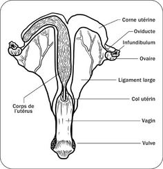 a diagram of the body parts of a cow  4h project