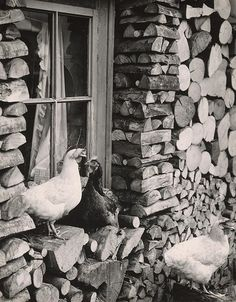 Martin Martinček: Obloženie drevenice:1963 - 1966 Black White Photos, Black And White, Wood Supply, Wooden Cottage, Heart Of Europe, Chickens Backyard, Animal Kingdom, Animals And Pets, Art Photography