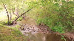 73 Best Crossing Creeks Photos images in 2018   Georgia