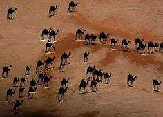 The black spots are the shades of the actual camels. (Great pic)