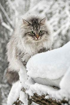 marabc: Sobrevive al frío un corazón caliente…