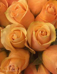 Pale orange at the market today. Pale Orange, Orange Roses, Just In Case, Wedding Planning, Future, Flowers, Plants, Future Tense, Plant