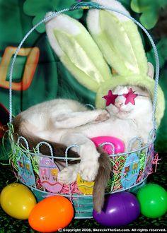 Feliz Páscoa Pet !!!