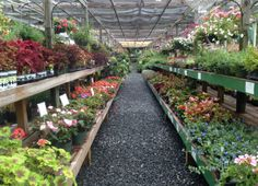 Southern Styles Nursery and Garden Center, Quality Annual plants in Charlotte. -… Southern Styles Nursery and Garden Center, Quality Annual plants in Charlotte. – Southern Styles Nursery and Garden Center Backyard Plants, Landscaping Plants, Chickens Backyard, Outdoor Plants, Pet Chickens, House Plants, Landscape Nursery, Garden Nursery, Plant Nursery