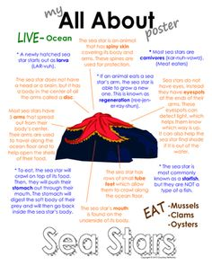 """My All About Sea Stars (starfish/star fish) Book - Ocean Animal Unit Study from Courtney McKerley on TeachersNotebook.com - (9 pages) - This """"All About Book"""" will be a fun addition to your classroom and lesson on sea stars. This packet can be used along with books specific to the animal or it can be used on its own. Other animals you will see in the ocean animal series include the sea hor"""