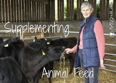 Feed Your Livestock without Breaking the Bank by:Jan Hatchett-- Many families that are moving toward a homesteading lifestyle or who just want to have more control over the quality of the foods they eat will eventually dabble in keeping livestock. These animals provide much more than food. They are amazing entertainment, wonderful for teaching children discipline and life lessons, and enhance the usefulness of your property.  http://mollygreen.com/blog/feed-your-livestock-without-breaking