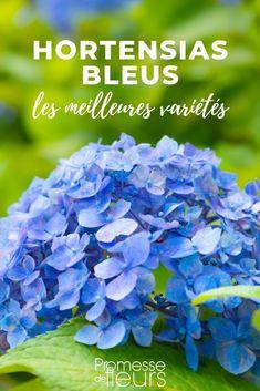 Découvrez les meilleurs hortensias bleus ainsi que nos conseils pour les cultiver au jardin #jardin #jardinage #hortensia #hydrangea #hortensiableu Image Categories, Hortensia Hydrangea, Ainsi, Gardens, Hydrangeas, Blue Hydrangea, Blue Garden, Trees And Shrubs, Blue Flowers