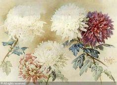 Chrysanthemums, Watercolor   c.1906 - Paul de Longpre (1955-1911)