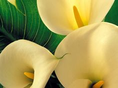 Browse Flowers photos and videos.