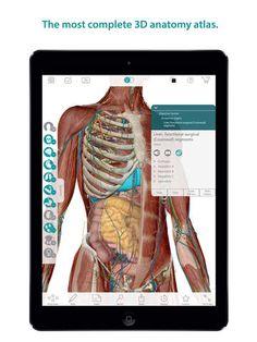 Netter Atlas Of Neuroanatomy And Neurophysiology