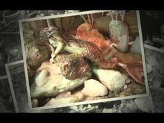 Galería El Rincón De Los Duendes - YouTube Turkey, Meat, Chicken, Videos, Youtube, Elves, Turkey Country, Youtubers, Youtube Movies