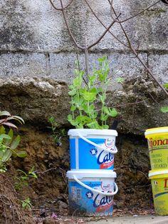 Potager hors sol faire pousser des l gumes sur le balcon ou sur la terrasse jardiner le d fi - Potager hors sol ...