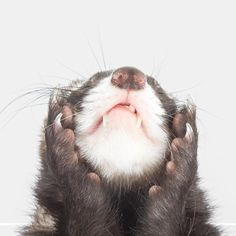 See this Instagram photo by @the.modern.ferret • 1,439 likes