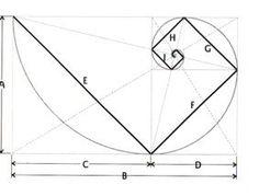 Le Nombre d'or Plus Fibonacci Golden Ratio, Fibonacci Spiral, Geometry Art, Sacred Geometry, Golden Ratio In Design, Divine Proportion, Creation Art, Chaotic Neutral, Design Basics