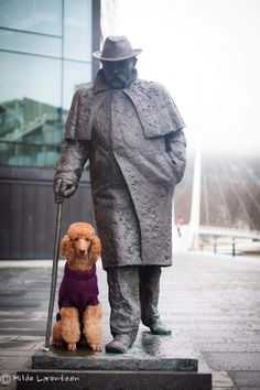 Poodle and statue