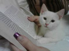 Reading time with Angel - aka Satan Kitteh
