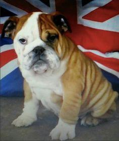 Zoe Jayde Spooner's dog Bella #PreciousPet of #April #PoM