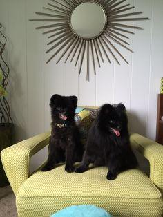 Charlie and Dahlia