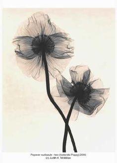 x ray flower, great tattoo idea