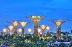 Glowing Supertrees at the Gardens by the bay Singapore