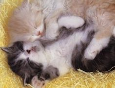 Cute kitten sleeping!