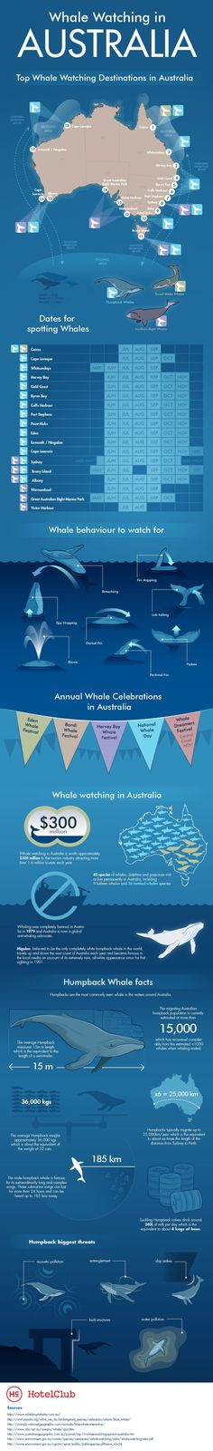 Whale watching in Australia
