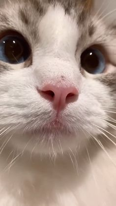 Funny Cute Cats, Cute Baby Cats, Cute Cats And Kittens, Cute Little Animals, Cute Funny Animals, Kittens Cutest, Cute Dogs, Cats In Love, Funny Cat Faces