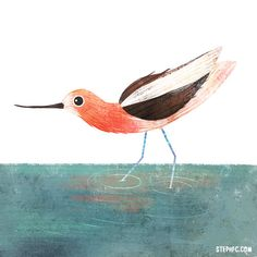 A collection of daily bird paintings by Stephanie Fizer Coleman. Watercolor Paintings, Bird Paintings, Watercolour, Bird Artists, Bird Illustration, American, Illustrators, Birds, Drawings