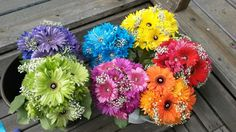 Rainbow wedding bridesmaid bouquets.  Gerbera daisy, dyed poms, babys breath.