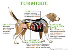 We all know the many benefits of turmeric for humans, but did you know it can similar effects for dogs?