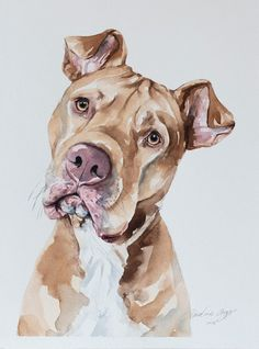 Pitbull – 'Scraps' the pitbull painted in watercolour by Wetnose Watercolours Pitbull – 'Scraps' der von Wetnose Watercolours in Aquarell gemalte Pitbull Animal Paintings, Animal Drawings, Art Drawings, Watercolor Animals, Watercolor Art, Portrait Watercolour, Pitbull Drawing, Dog Portraits, Pitbulls